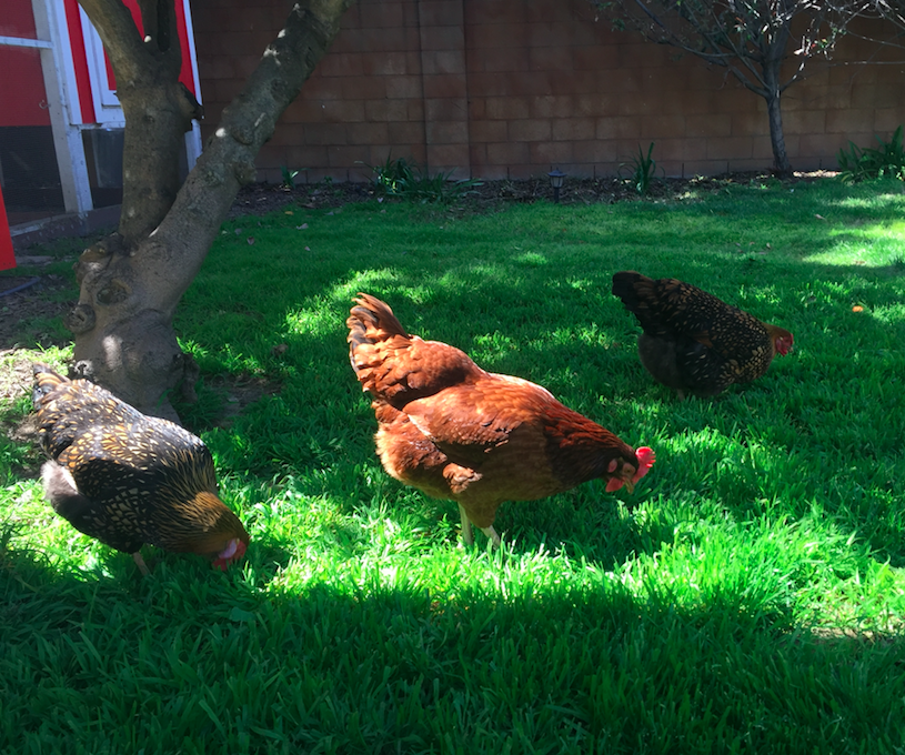 Philip Keppel Real Estate Family Chickens